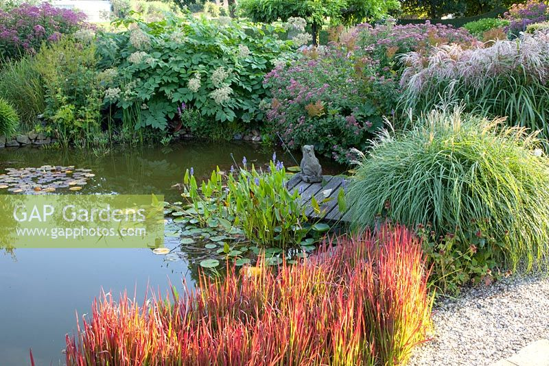 Pondside Planting With Imperata Cylindrica Red Baron Aralia Californica Eupatorium Canum