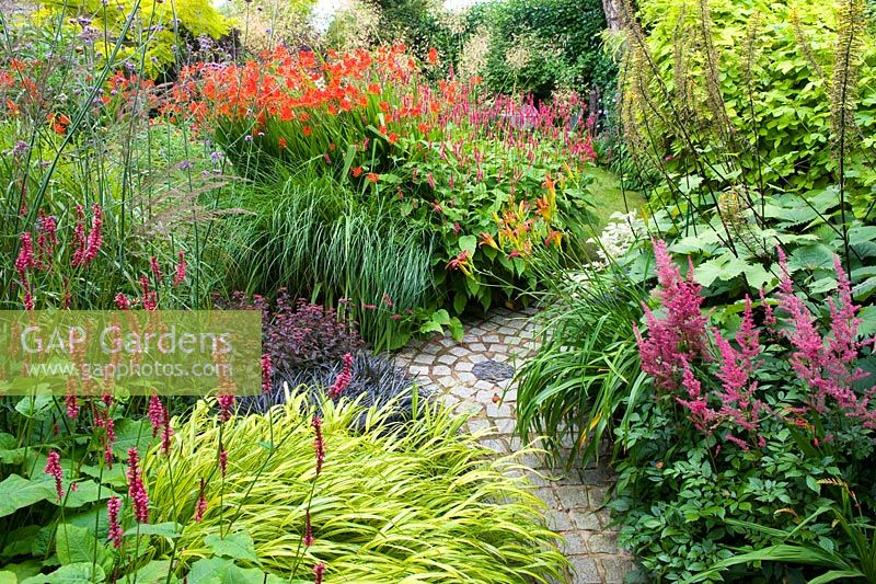 Colourful Summer garden with Persicaria 'Firetail', Hakonechloa macra 'Aureola' Sedum 'Purple Emperor', Crocosmia 'Lucifer', Miscanthus, Astilbe 'Red Sentinel' and Ligularia 'The Rocket'