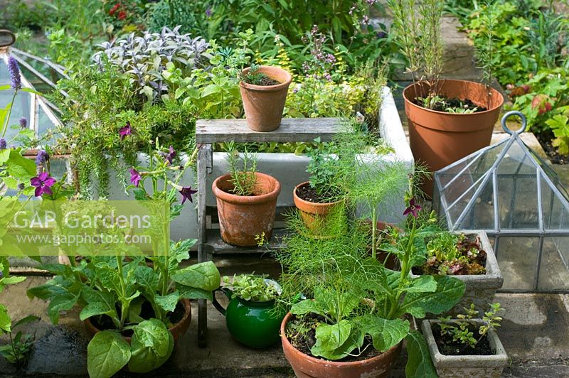 Herbs and flowers in containers