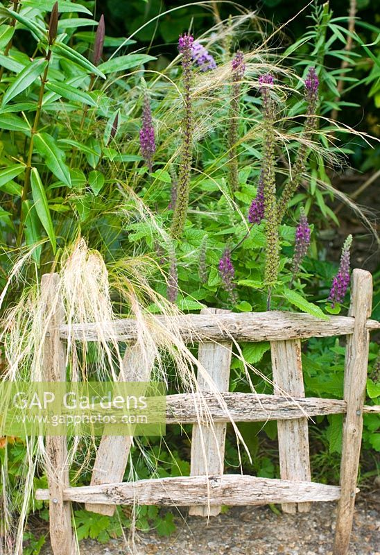 Rustic plant support with Hebe, Stipa tennuissima and Teucrium hircanicum 'Purple Tails'