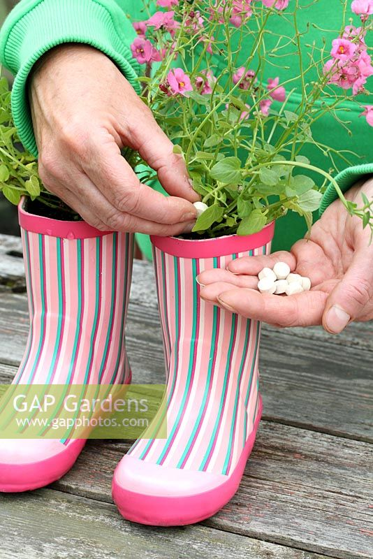 Step by step of planting a pair of recycled kids wellies with Diascia 'Little Dancer' - Adding plant food tablets