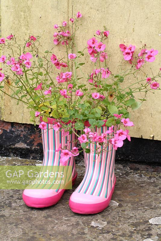 Step by step of planting a pair of recycled kids wellies with Diascia 'Little Dancer' - The finished container planting on a rustic doorstep