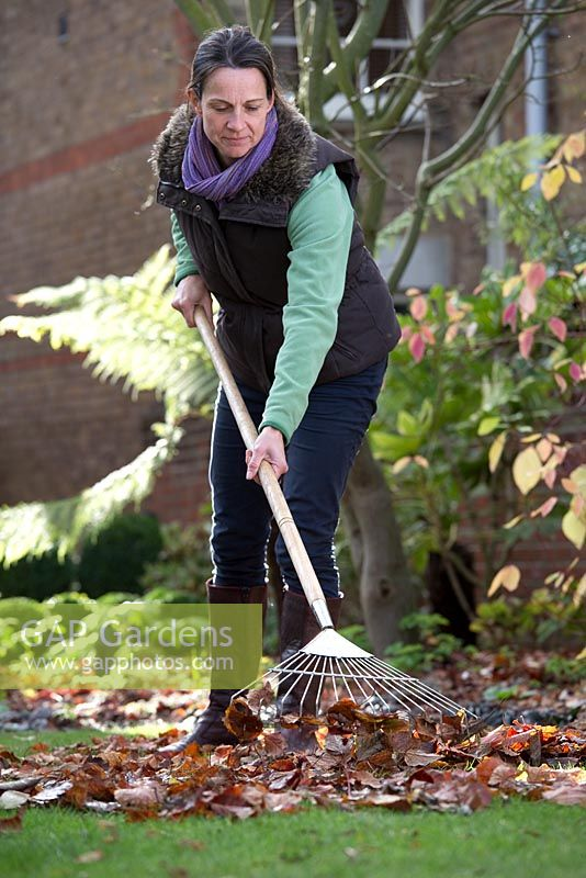 Step by step raking and collecting autumn leaves