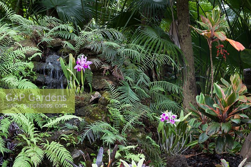Blechnum Serralutum   Swamp Fern, Cattleya Hybrids, And Cordyline Fruticosa  U0027Red Bullu0027