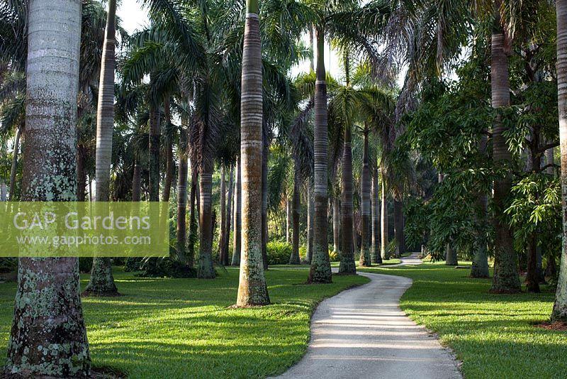 GAP Gardens - The Royal Palm Grove at McKee Botanical Garden, Vero ...