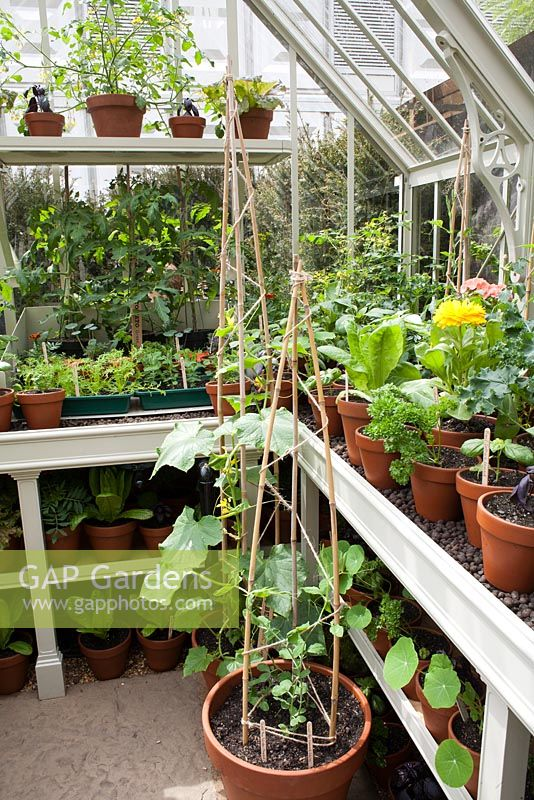 Interior of small greenhouse with growing vegetables and herbs.