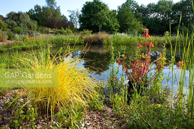 View of pond with Carex elata 'Aurea' in foreground