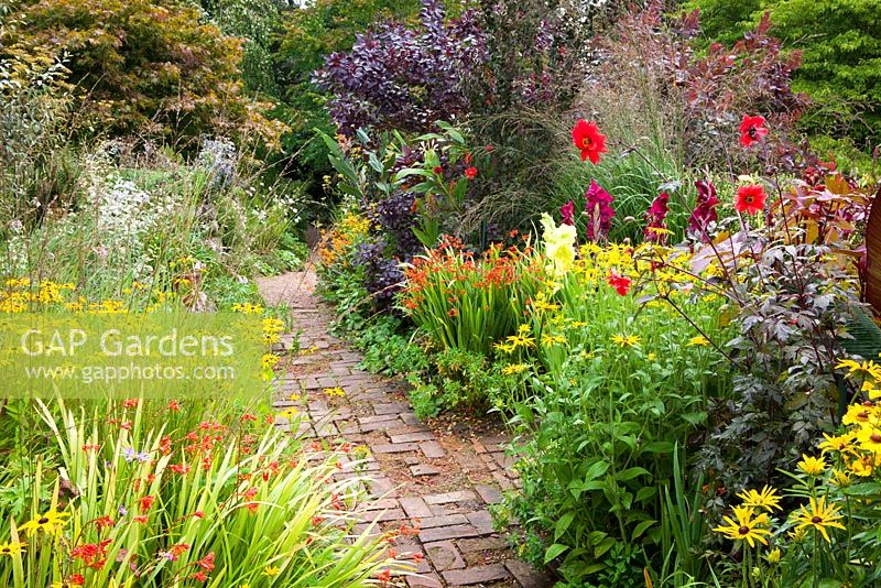 Brick path through the hot borders at Glebe Cottage. Dahlia 'Bishop of Llandaff', Rudbeckia fulgida var. deamii, Crocosmias, Gladiolus and Cotinus coggygria Purpureus Group
