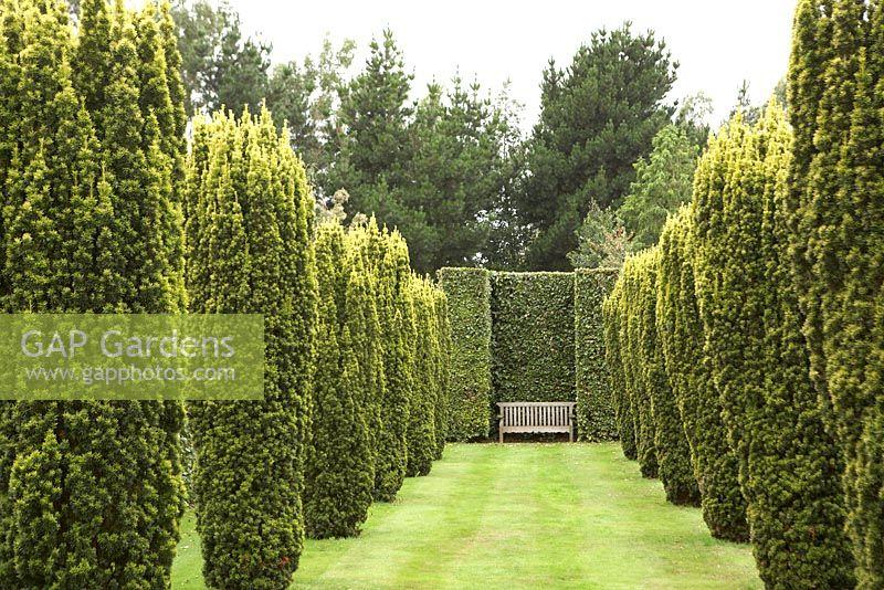 gap gardens avenue of taxus baccata 39 fastigiata aurea. Black Bedroom Furniture Sets. Home Design Ideas