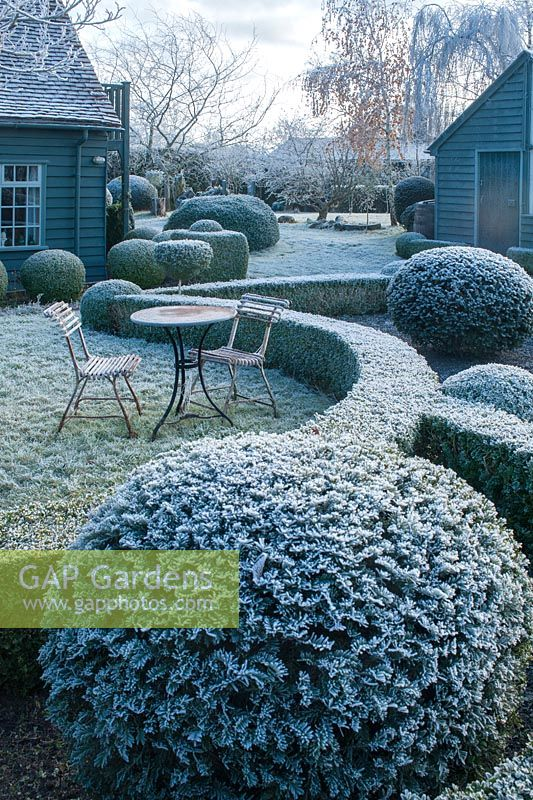 Wrought iron garden table and seats. Yew and box topiary and dwarf hedges on frosty morning in December - The Mill House, Little Sampford, Essex