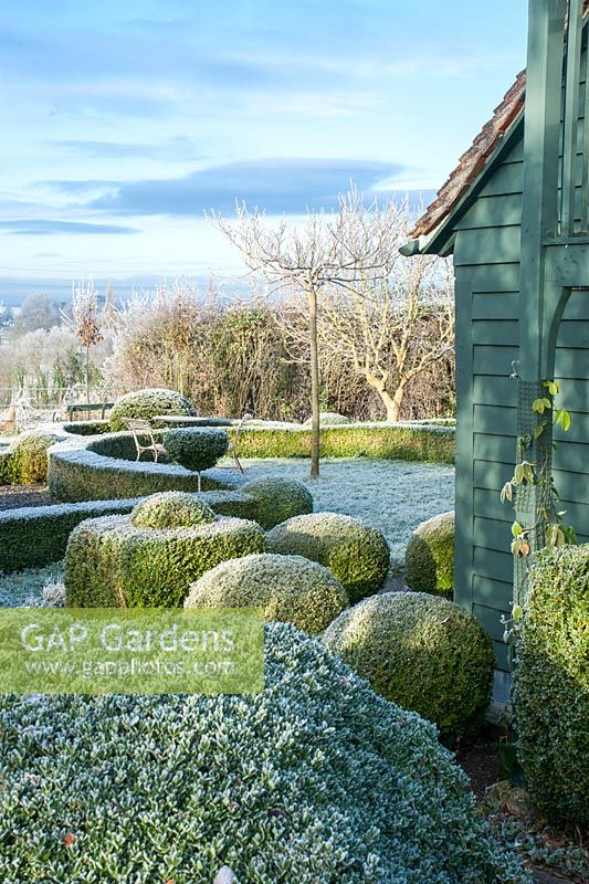 Yew and box topiary and dwarf hedges on frosty morning in December - The Mill House, Little Sampford, Essex