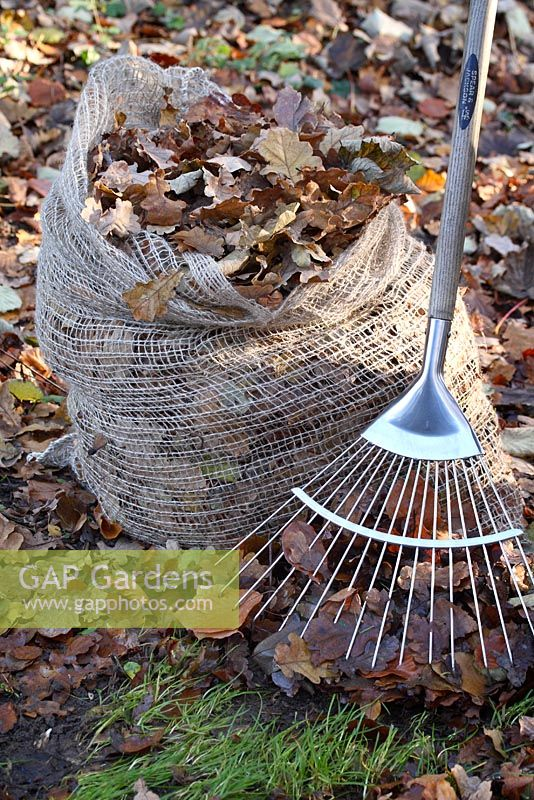 A garden rake and a biodegradable leaf jute sack, filled with raked leaves