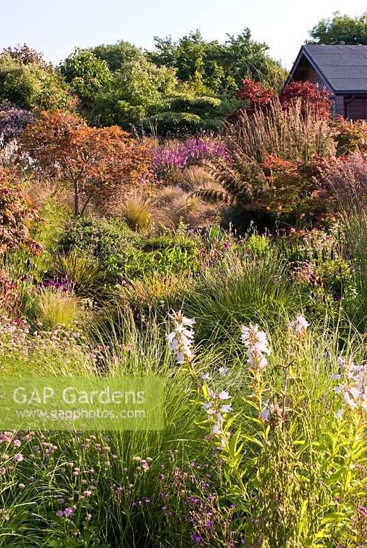 Informal country garden in July with grasses and perennials including Dierema, Astrantia, Sanguisorba, Iris, Cirsium, Epimedium, Calamagrostis, Campanula, Chionochloa rubra , Stipa and Carex - Wildside garden