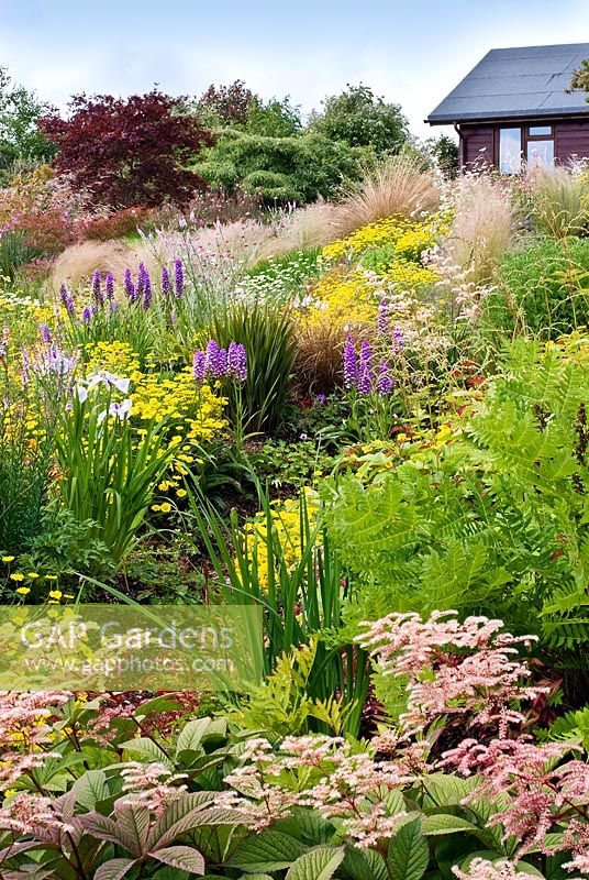 Informal country garden in July with grasses and perennials including Anthemis tinctoria 'Dwarf form', Carex comans, Dactylorhiza x grandis 'Blackthorn hybrid', Lychnis coronaria, Stipa tenuissima, Rodgersia,  Osmunda, Iris kaempferi, Astilbe and Chionochloa rubra- Wildside garden