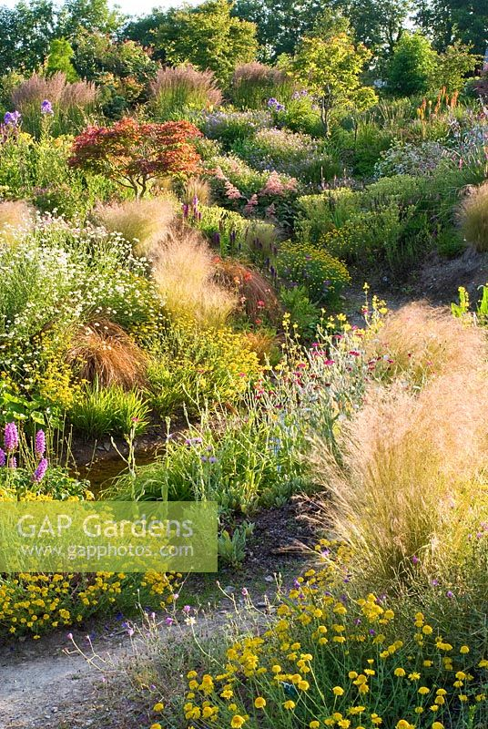 Path through informal country garden in July with grasses and perennials including Astilbe, Hosta, Rodgersia, Filipendula, Calamagrostis x acutiflora 'Karl Foerster', Stipa tenuissima, Primula, Dactylorhiza and Tanacetum - Wildside garden