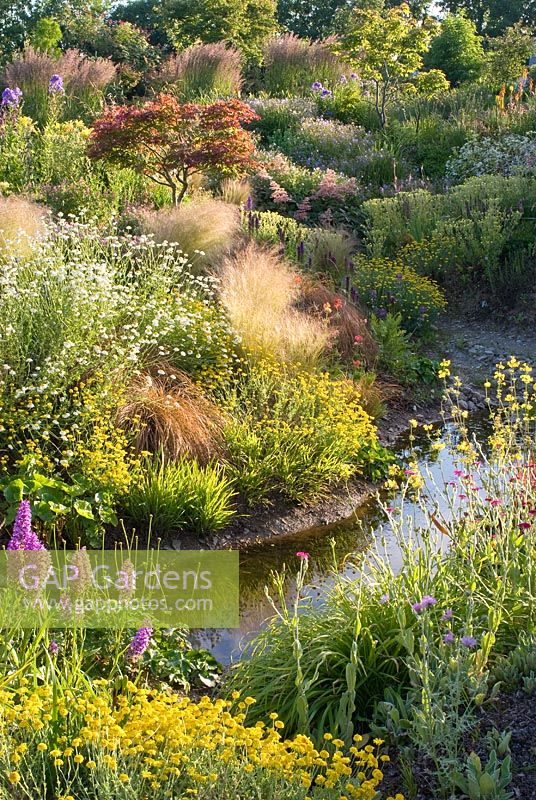 Stream through informal country garden in July with grasses and perennials including Astilbe, Hosta, Rodgersia, Filipendula, Calamagrostis x acutiflora 'Karl Foerster', Stipa tenuissima, Primula, Dactylorhiza and Tanacetum - Wildside garden