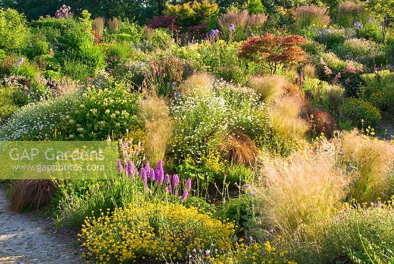 Country garden in July with grasses and perennials including Astilbe, Hosta, Rodgersia, Filipendula, Calamagrostis x acutiflora 'Karl Foerster', Stipa tenuissima, Primula, Dactylorhiza and Tanacetum - Wildside garden