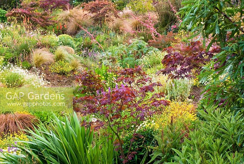 Naturalistic planting of Acer, Chionichloa rubra, Kniphofia, Anthemis, Sipa tenuissima , Primula, Melianthus major, Linaria, Yucca, Phormium, Carex - Wildside garden