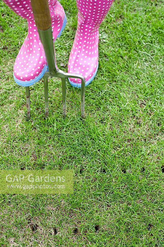 Woman aerating a lawn in spring using a garden fork.