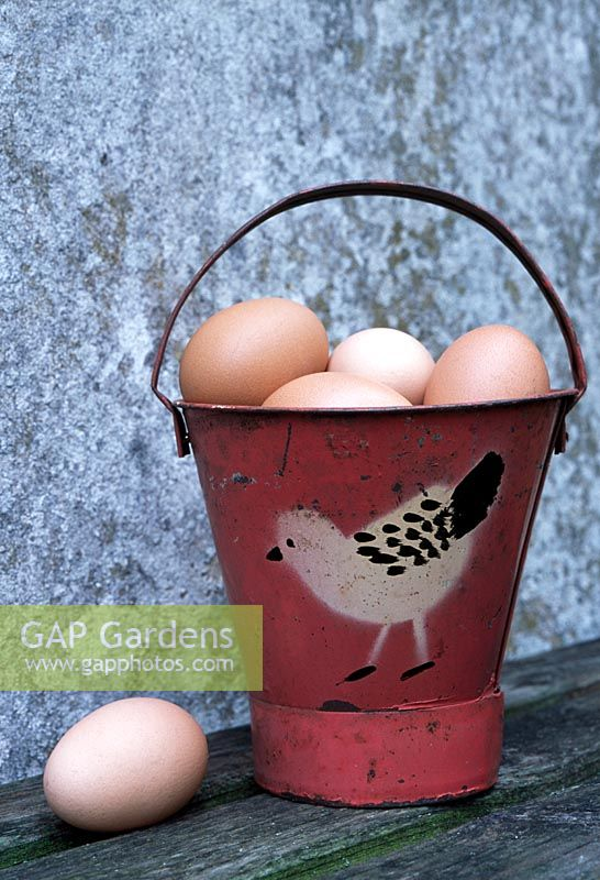 Emamel bucket full of hens eggs