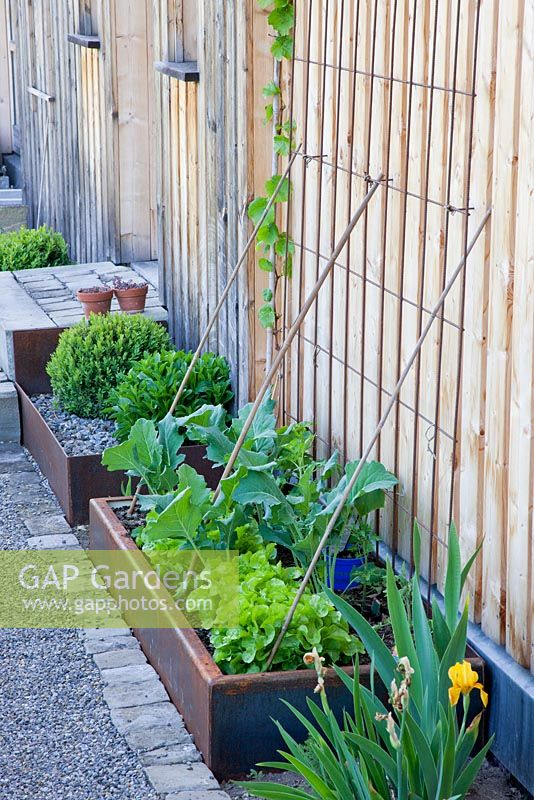 Between a gravelled path and the wooden wall of a house, corten steel troughs contain vegetables
