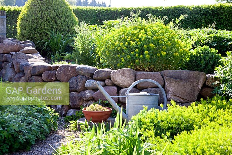 Tin watering can and Sempervivum in terracotta bowl in front of a dry stone wall made of collected field stones, other plants are Buxus, Coreopsis verticillata, Euphorbia polychroma,  Sempervivum