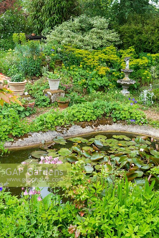 Gap gardens large pond surrounded with densely planted for Large pond plants