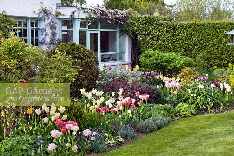 Gap gardens spring flower borders with tulip varieties shrubs and spring flower borders with tulip varieties shrubs and perennial plants house wall and conservatory mightylinksfo