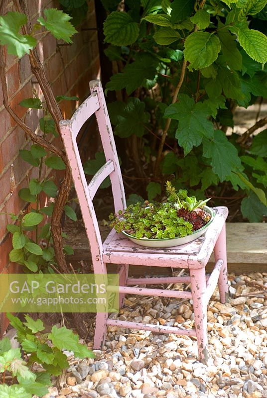 Succulents in vintage enamel dish on childs painted chair