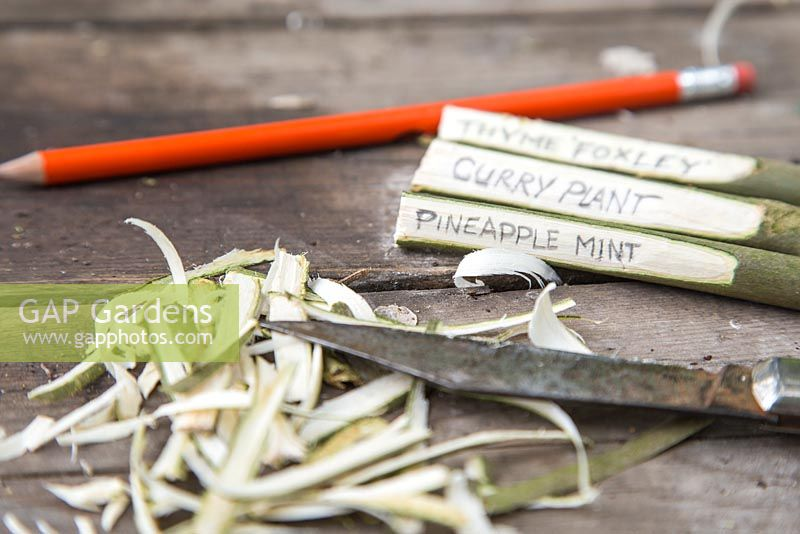 Step by Step - Creating plant labels using cuttings from a willow branch