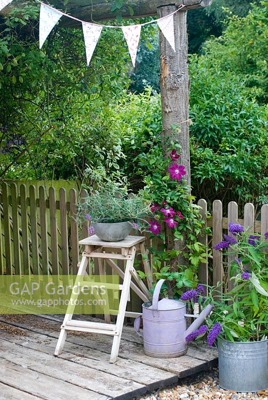 Rustic arbour with Clematis 'Rouge Cardinal'