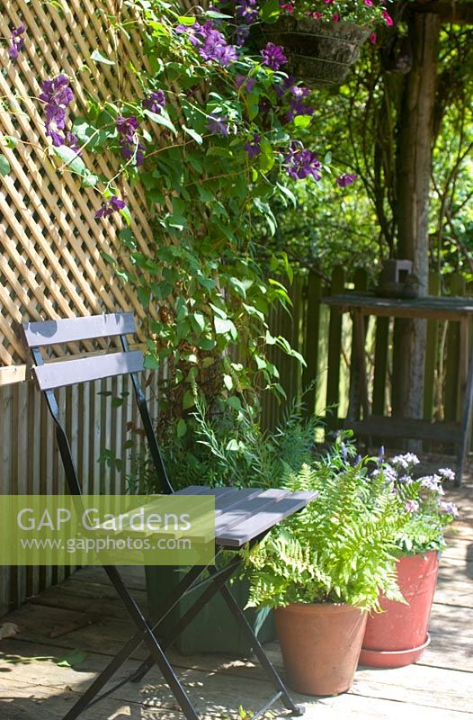 Seat under arbour with trellis and Clematis viticella 'Etoile Violette'