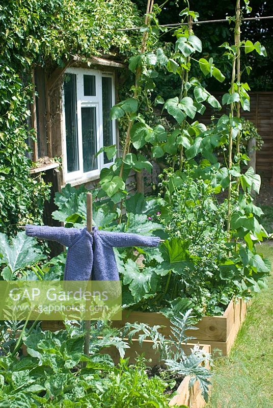 Vegetable beds with scarecrow