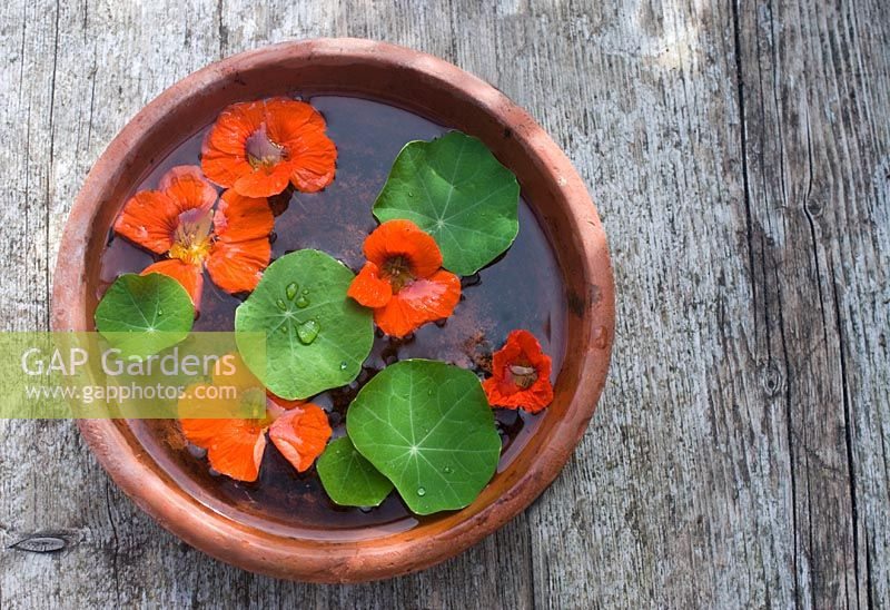 Mini water feature - nasturtium flowers and leaves floating in terracotta saucer