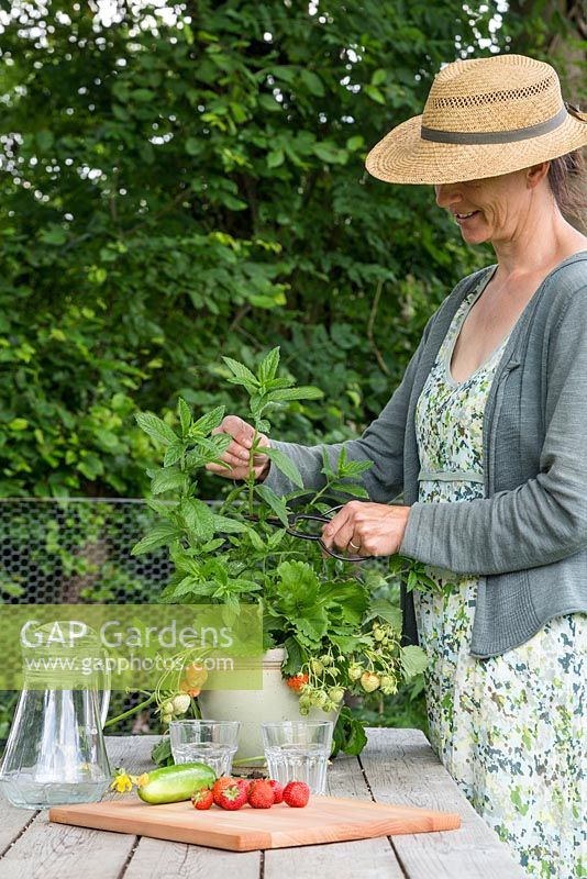 Woman harvesting Mint for the final ingredient