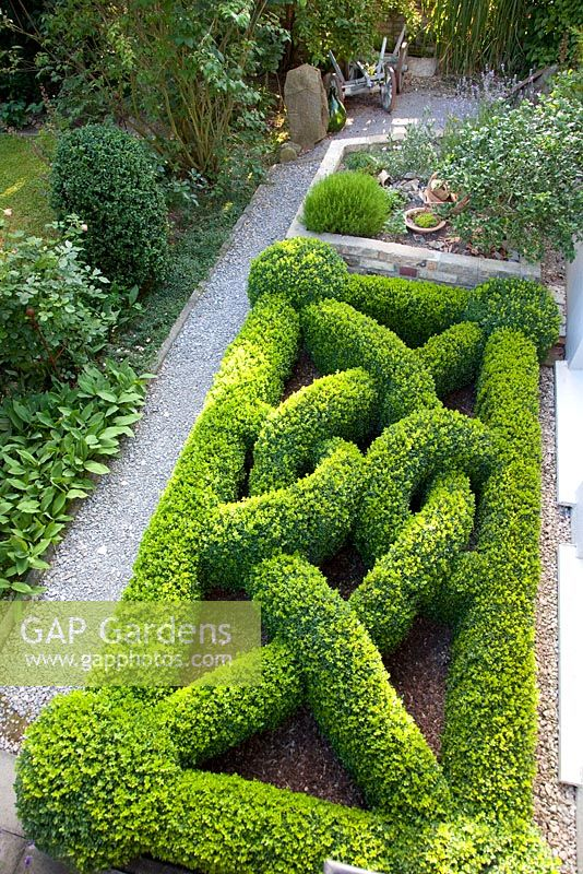Boxwood Knot Garden And Herb Garden, Buxus
