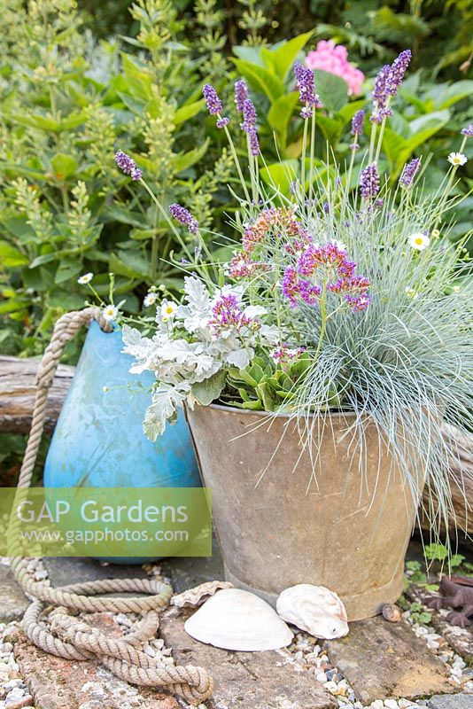Seaside pot (Lavender 'Hidcote', Erigeron 'Profusion', Festuca, Cineraria and Limonium)