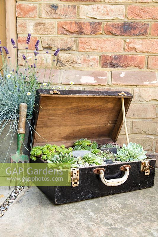 Step by Step - Recycled tool chest used as succulent container. Mixed succulents