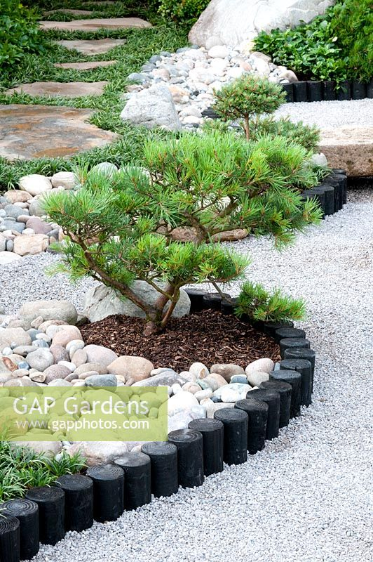 Japanese Style Garden With Pinus In Borders