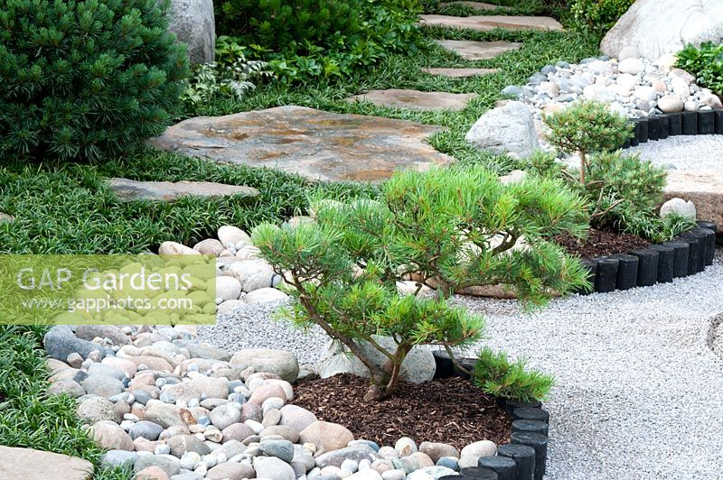 Gap Gardens Japanese Style Garden With Pinus In Borders