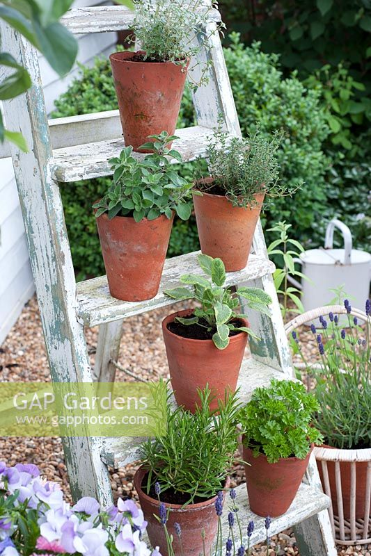 Selection of culinary herbs displayed on ladder including thyme, sage, oregano and parsley