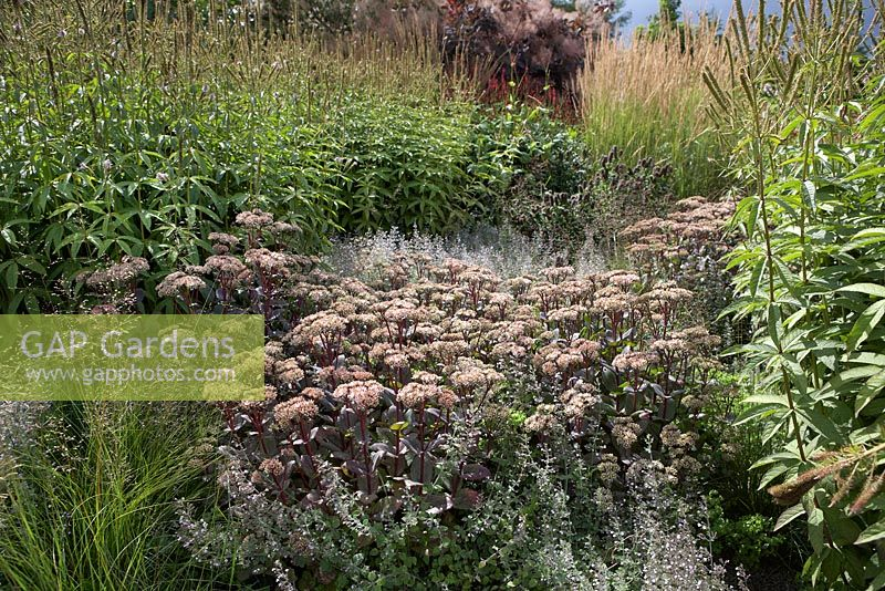 gap gardens piet oudolf border at rhs garden wisley planting shows calaminth nepeta subsp. Black Bedroom Furniture Sets. Home Design Ideas