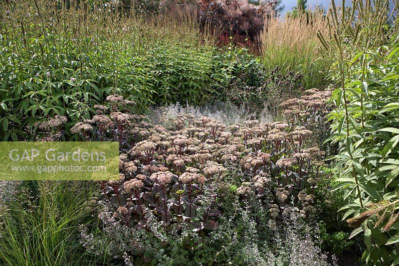 gap gardens piet oudolf border at rhs garden wisley planting shows calaminth nepeta subsp. Black Bedroom Furniture Sets. Home Design Ideas
