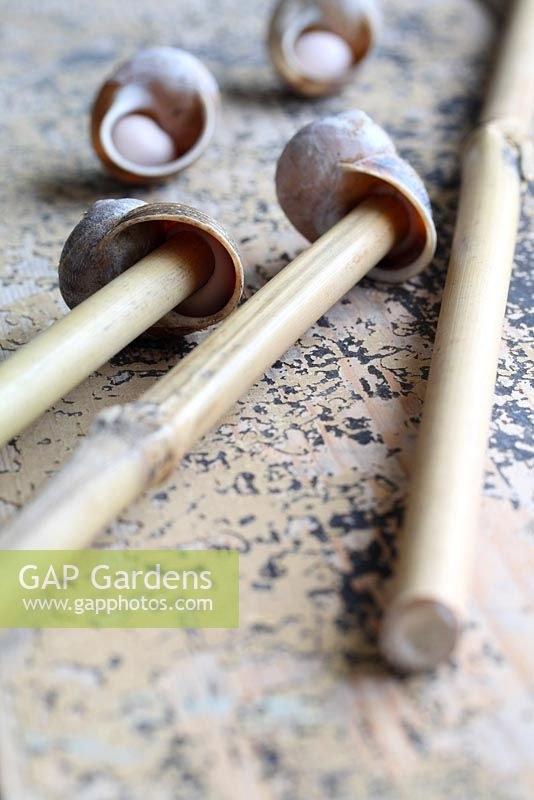 Step by step of making snail shell cane toppers - Push the narrow end of the bamboo canes up inside the shells to make contact with the modelling clay to secure in place