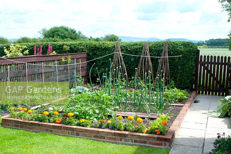 Small raised brick vegetable plot in cottage garden in June with rows of vegetables and companion planting of marigold sheltered by wooden fence and Crataegus monogyna -  Hawthorn hedge and wooden gate leading to countryside