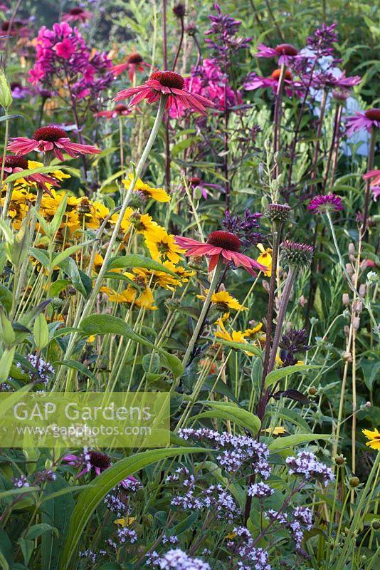 Prairie Planting Includes Echinacea Purpurea, Phlox Paniculata U0027Aidau0027,  Coreopsis And Amsonia,