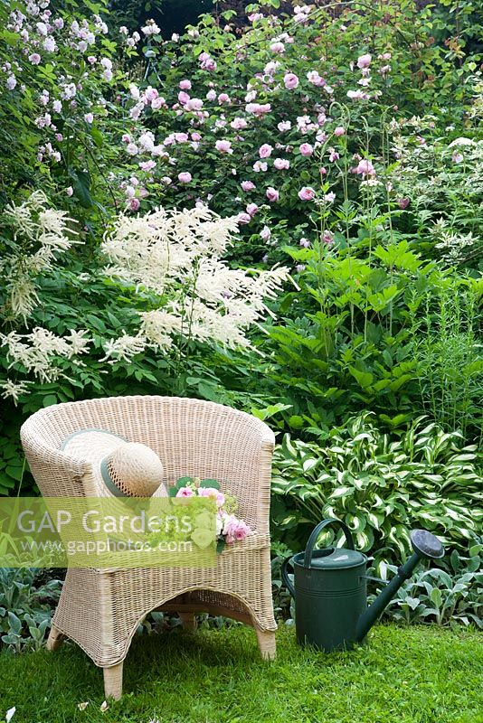 Green and white border with Hosta undulata 'Univittata', Stachys byzantina 'Silver Carpet', Aruncus sylvestris, Cornus elegantissima 'Alba', Rosa 'Constance Spry', Rosa 'Paul's Himalayan Musk' and wicker chair with straw hat and bouquet
