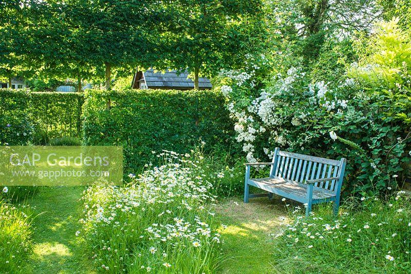 Garden Seat In Corner Of Wild Garden With Oxe Eye Daisies, Rosa U0027Seagullu0027