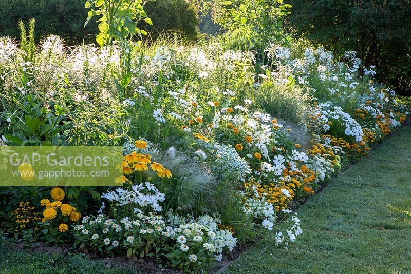 White And Yellow Border With Annual Bedding Plants Antirrhinum Snapshot F1 Cleome Euphorbia