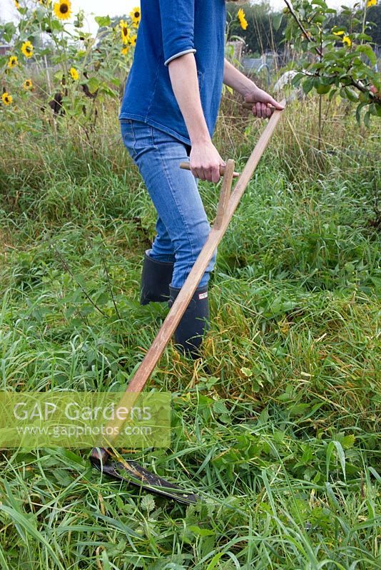 Lady using a turk handled scythe to cut grass and weeds on allotment